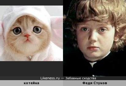 Этот котик напомнил мне Федю Стукова )