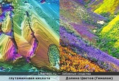 Глутаминовая кислота под микроскопом напомнила вид на Долину Цветов