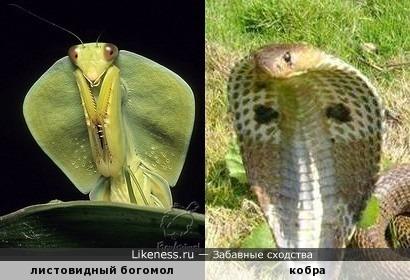 Опасные создания