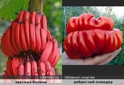 Красные - прекрасные!