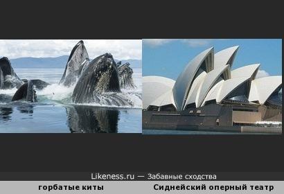 Сегодня в программе - песни китов!
