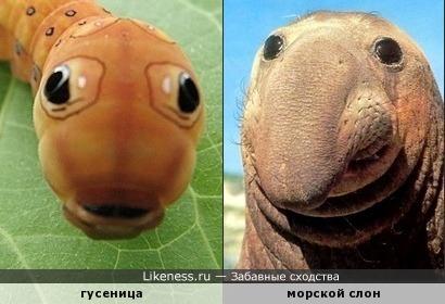 Из гусеницы тоже можно сделать слона. Правда, только морского.)