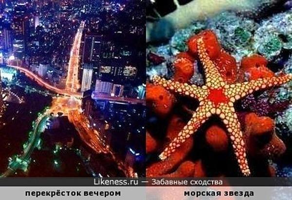 Вечерний перекрёсток похож на морскую звезду