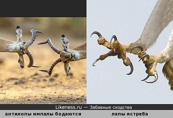 Что важнее - крылья, ноги... или рОги?