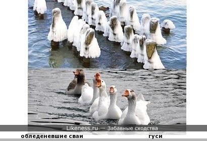 Обледеневшие сваи на причале похожи на плывущих гусей