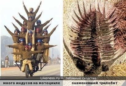 Группа военных на параде напомнила трилобита