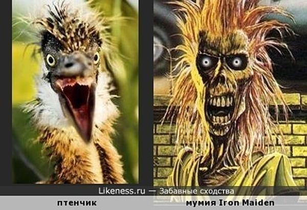 """Птенец большой голубой цапли напомнил мумию с обложки дебютного альбома """"Iron Maiden"""