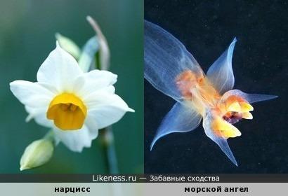 Цветок для ангела