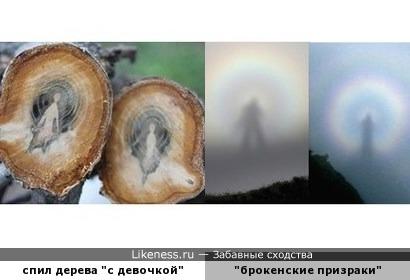"""Необычный спил дерева похож на оптическое явление """"брокенские призраки"""""""