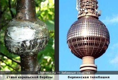 """Лесная газета"