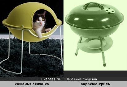 """Суп с котом"", ""пирожки с котятами""... Такой вот ""тили-бом""..."