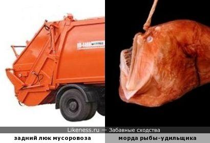 Каждый раз при виде мусоровоза вспоминаю эту рыбу!