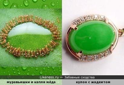 Зелёные сокровища