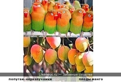- Чтобы найти фрукт, надо думать как фрукт... Надо выглядеть как фрукт!