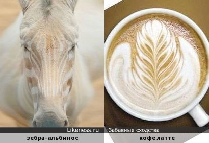 Настоящий кенийский кофе
