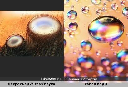Глаз твоих росинки чистые...)