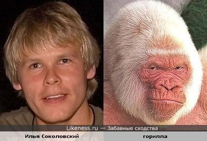 Илья Соколовский похож на гориллу-альбиноса