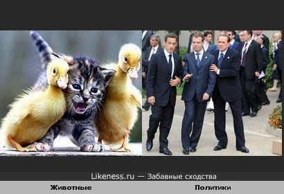 Состояние нестояния: животные vs политиков