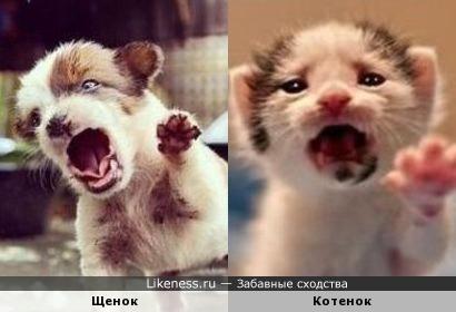 Щенок похож на котенка