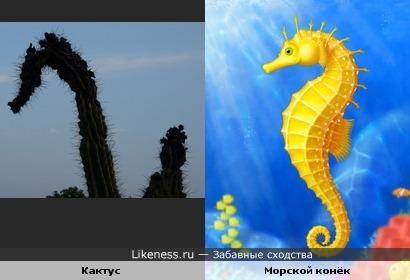 картинка конек морской