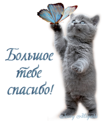 Святую, кот открытка спасибо