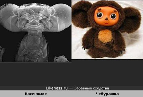 насекомые под микроскопом фото