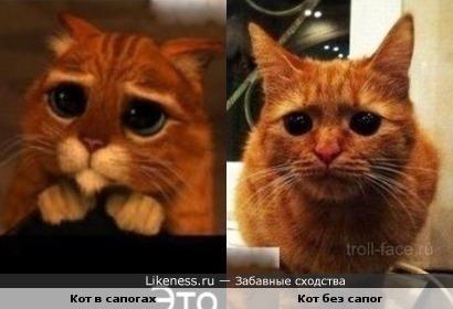 Кот глаза кот в сапогах 81